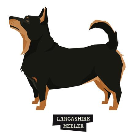 Dog collection Lancashire Heeler Geometric style Isolated object set