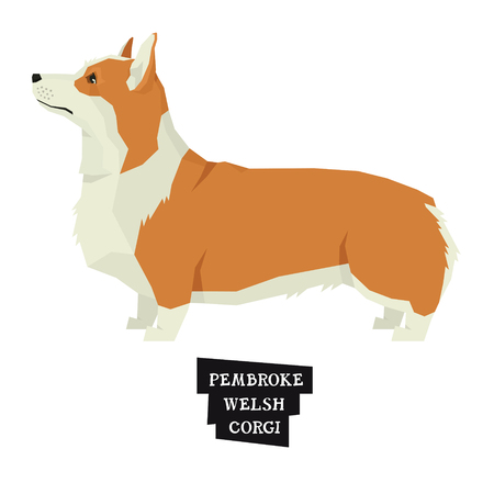 Dog collection Pembroke Welsh Corgi Geometric style Isolated object set