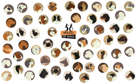 58 Breeds of dogs icon set