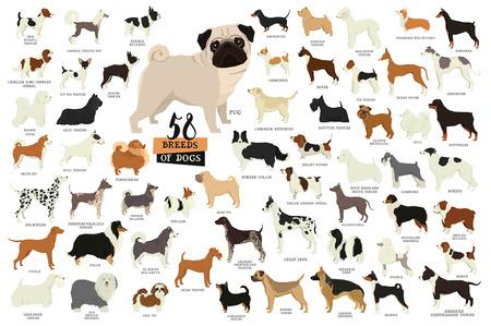 58 Hondenrassen Geïsoleerde objecten instellen Vector Illustratie