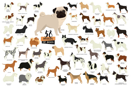 58 Breeds of dogs Isolated objects set