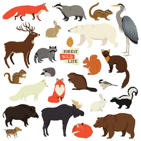 Objetos aislados de vida silvestre del bosque Conjunto de animales