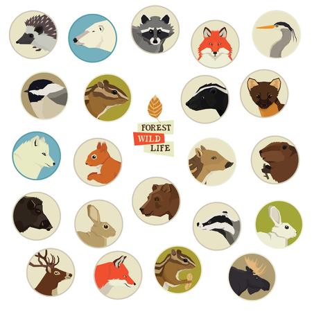 Conjunto de marcos redondos de animales de vida silvestre de bosque Ilustración de vector
