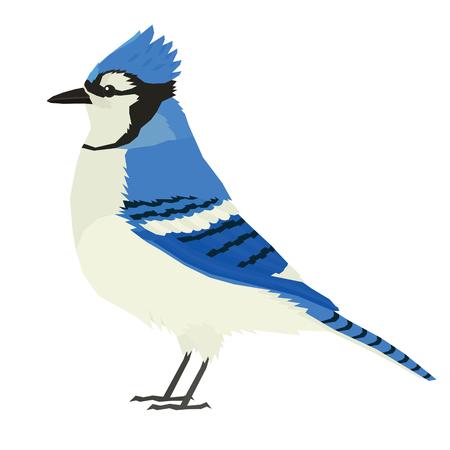Blue Jay bird Wildlife Vector animals Isolated object set