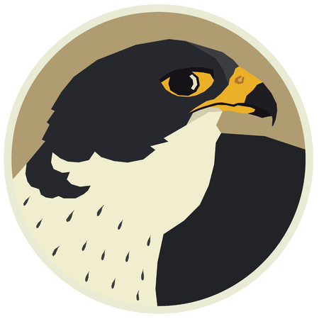 Birds collection Vector illustration of a peregrine falcon in round frame set Stock Illustratie