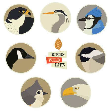 Vector illustration of birds in round frames set