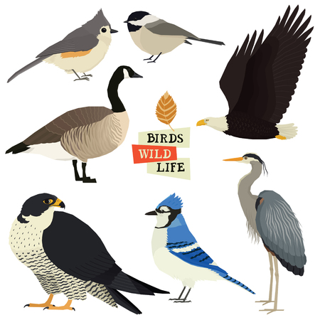 Birds collection Vector illustration Isolated objects set