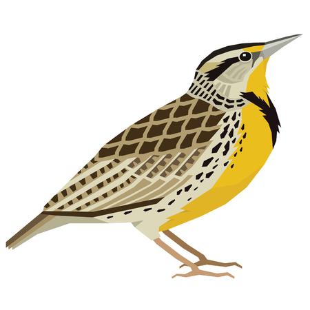Birds collection Western meadowlark Vector illustration Isolated object set