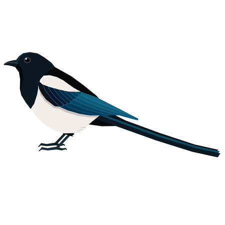 Birds collection Magpie Vector illustration Isolated object set Illustration