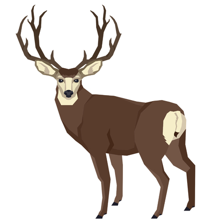Wild animals Vector illustration of a mule deer Isolated object Geometric style set