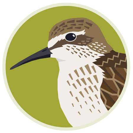 Birds collection Sandpiper Vector illustration of a bird in a round frame set Illustration