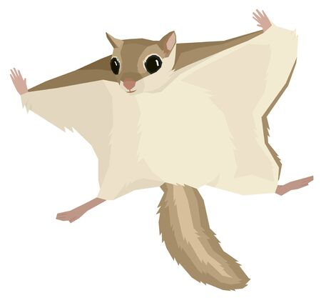 Wild animals Vector illustration of the flying squirrel Isolated object Geometric style set