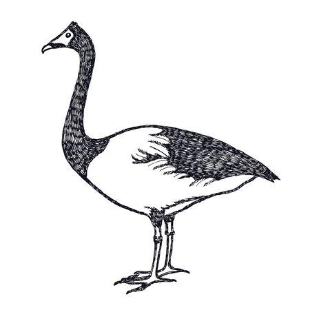 Dibujo a mano alzada, ilustración vectorial Patos y gansos El conjunto Magpie Goose