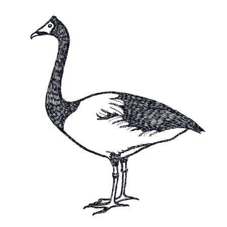 Hand drawing Vector illustration Ducks and geese The Magpie Goose set