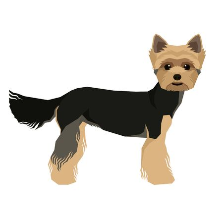 Vector illustration Dog collection Yorkshire terrier Geometric style Isolated object set