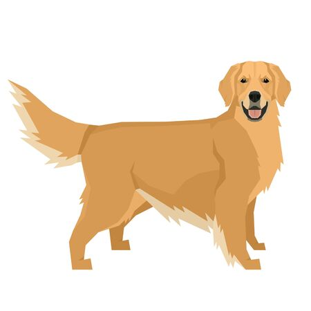 Dog collection Golden Retriever Geometric style Isolated object set
