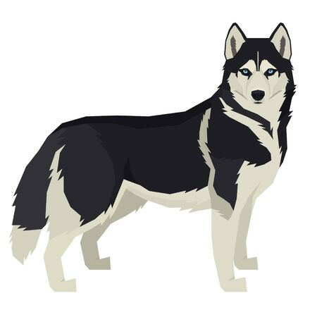 Vector illustration Dog collection Siberian Husky Geometric style Isolated object set