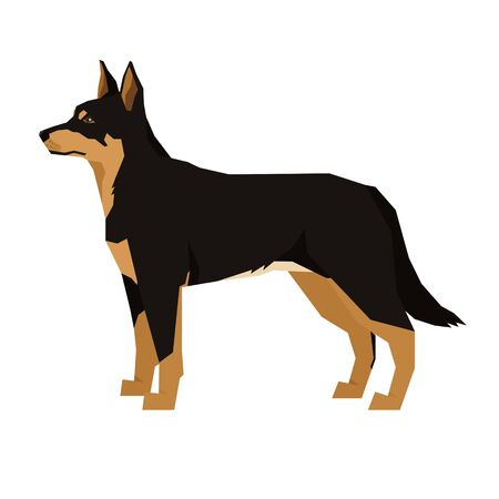 Vector illustration Dog collection Black and Tan Australian Kelpie Geometric style Isolated object set