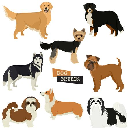 Vector illustration Dog collection Yorkshire terrier, Havanese Dog, Siberian Husky, Golden Retriever, Bernese Mountain Dog, Griffon Bruxellois, Shih Tzu,Pembroke Welsh Corgi Isolated objects set  イラスト・ベクター素材