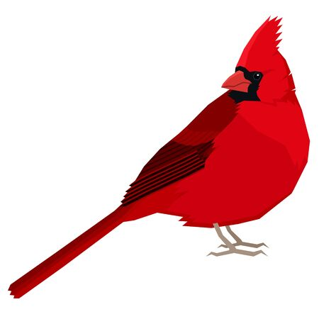 Cardinal bird Vector illustration Isolated object set Stock Illustratie