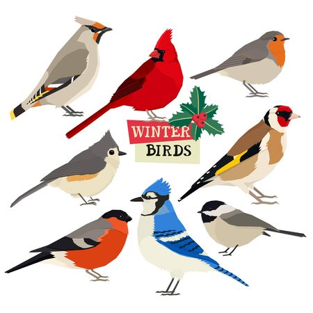 Winter birds Vector illustration Christmas holly trees Isolated objects set