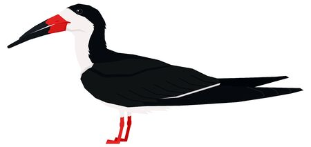 Black skimmer bird Vector illustration Isolated object set
