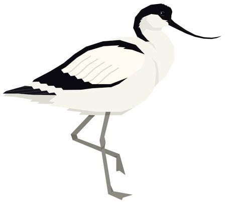 Pied avocet bird Vector illustration Isolated object set