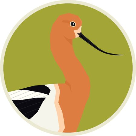 Birds collection American avocet Vector illustration Round frame set