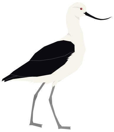 Birds collection Andean avocet Vector illustration Isolated object set Иллюстрация