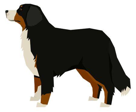 Dog Breeds Vector illustration Bernese Mountain Dog Isolated object set