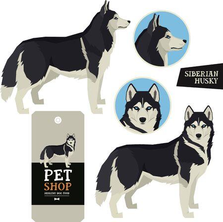 Dog Breeds Vector illustration Siberian Husky Isolated objects Ilustração