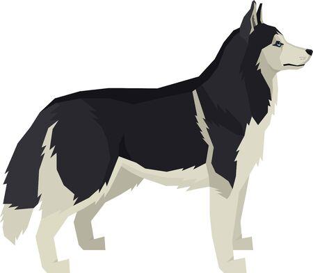 Vector illustration Dogs Siberian Husky set