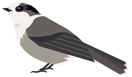 Wild birds Canada gray jay Vector illustration Isolated object set Ilustração