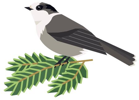 Wild birds Canada gray jay Vector illustration of a sitting bird on a pine branch Isolated object set