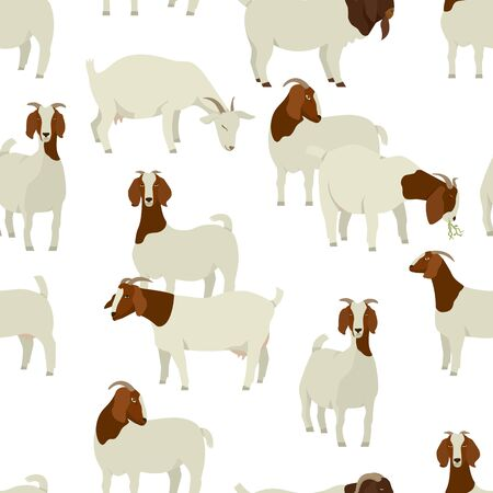 Farming today White & Brown Boer goats Vector illustration Seamless pattern set