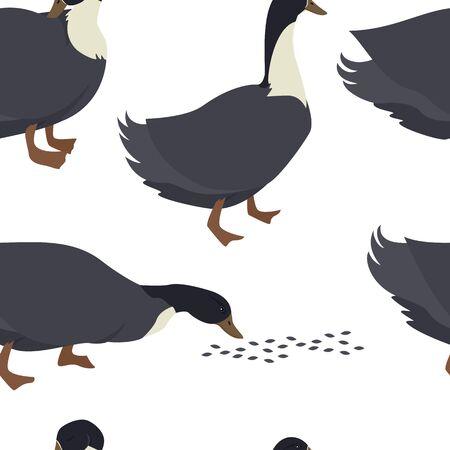Farming today Blue swedish duck Vector illustration of a breed of domestic birds Seamless pattern set 矢量图像