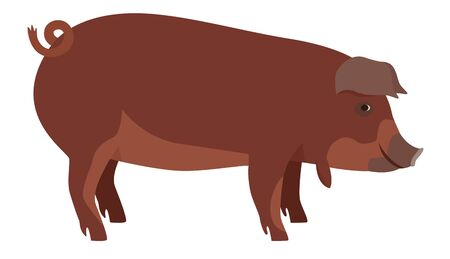 Farming today The Red Wattle hog Breeds of domestic pigs Vector illustration Isolated object set Vector Illustration