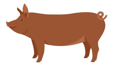 Farming today The Tamworth pig Breeds of domestic pigs Vector illustration Isolated object set