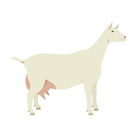 Saanen goat Breeds of domestic goats Flat vector illustration Isolated object on white background set