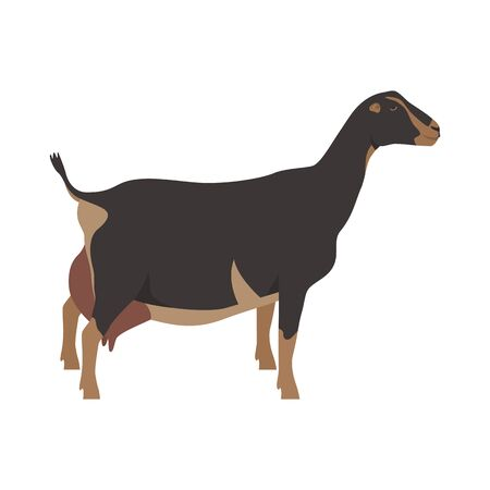 LaMancha goat Breeds of domestic farm animals Flat vector illustration Isolated object on white background set