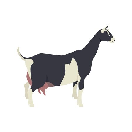 Sable goat Breeds of domestic farm animals Flat vector illustration Isolated object on white background set