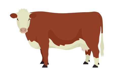 Hereford cow British breed of beef cattle Flat vector illustration Isolated object on white background set Vectores