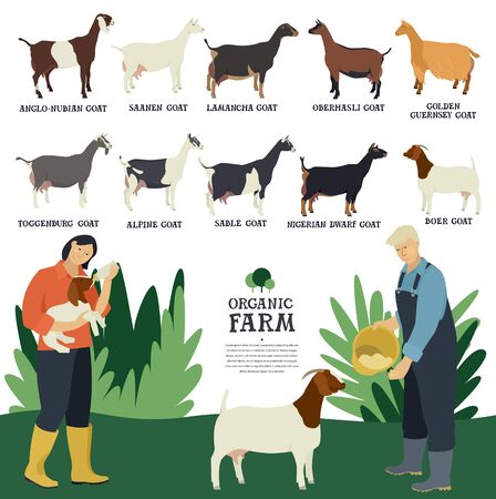 Set of ten breeds of domestic goats Flat vector illustration Two farmers working on a farm Cattle breeding and stock raising set
