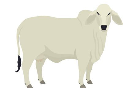 Brahman cow  Breeds of domestic cattle Flat vector illustration Isolated object on white background set