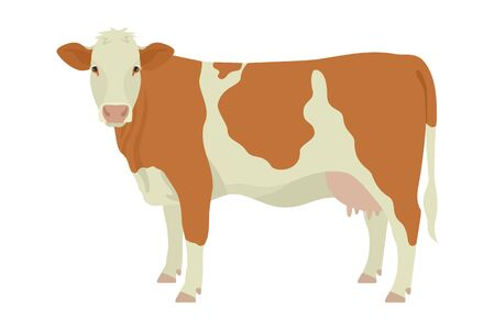 Simmental cow Breeds of domestic cattle Flat vector illustration Isolated object on white background set