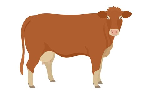 Limousin cow  Breeds of domestic cattle Flat vector illustration Isolated object on white background set