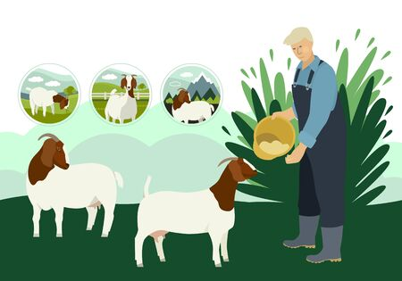 Farmer and goats Flat vector illustration Countryside and farmland, cattle breeding and stock raising Organic farm Decorative banner set
