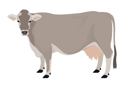Brown Swiss cow Breeds of domestic cattle Flat vector illustration Isolated object on white background set