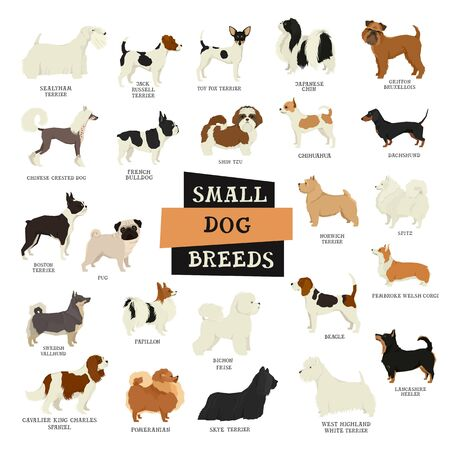 Small Dog breeds Isolated objects set
