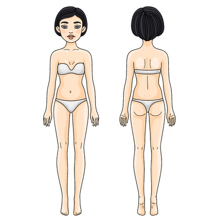 Female body proportions, front and back  Asian girl  Illustration